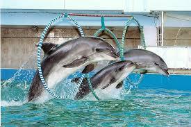 римини дельфинарий